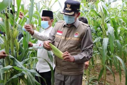 Wako Firdaus: Peran Petani Besar dalam Jaga Ketahanan Pangan